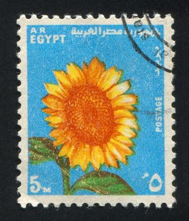 abjad: EGYPT - CIRCA 1971: stamp printed by Egypt, shows Sunflower, circa 1971