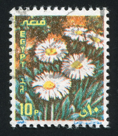 caulis: EGYPT - CIRCA 1990: stamp printed by Egypt, shows Camomiles, circa 1990