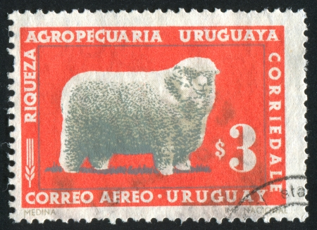 URUGUAY - CIRCA 1967: stamp printed by Uruguay, shows Corriedale Ram, circa 1967 photo
