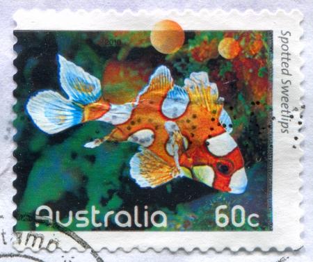 AUSTRALIA - CIRCA 2010: stamp printed by Australia, shows Sea fish, Spotted Sweetlips, circa 2010 Stock Photo - 13980760