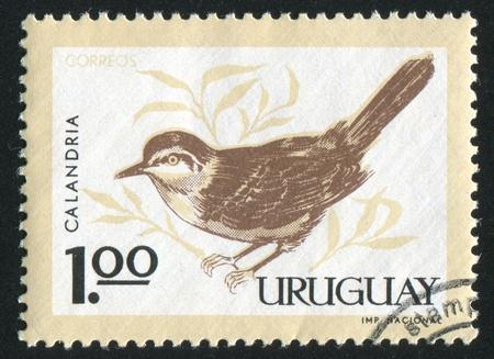 ruiseñor: URUGUAY - CIRCA 1963: sello impreso por el Uruguay, muestra Tiza de ceja ruiseñor, alrededor del año 1963