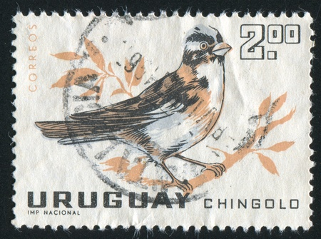URUGUAY - CIRCA 1963: stamp printed by Uruguay, shows Rufous collared Sparrow, circa 1963 Stock Photo - 13981273
