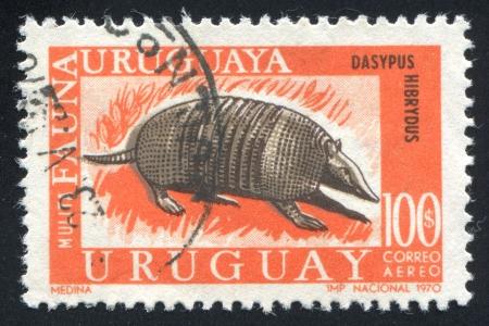 armour plating: URUGUAY - CIRCA 1970: stamp printed by Uruguay, shows Mulita Armadillo, circa 1970 Stock Photo