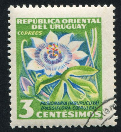 phytology: URUGUAY - CIRCA 1954: stamp printed by Uruguay, shows Passion Flower, circa 1954