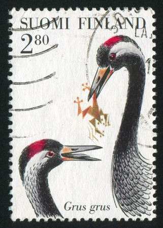FINLAND - CIRCA 1997: stamp printed by Finland, shows Grus Grus (Cranes), with frog, circa 1997 Stock Photo - 14171746