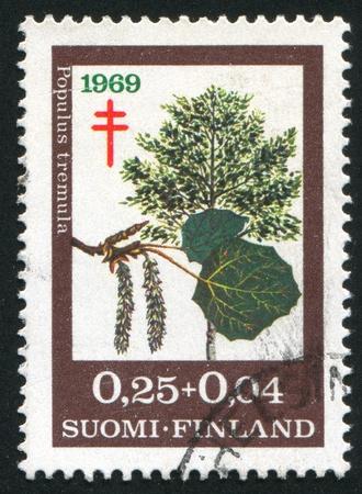 quaking aspen: FINLAND - CIRCA 1969: stamp printed by Finland, shows European Aspen, circa 1969 Stock Photo