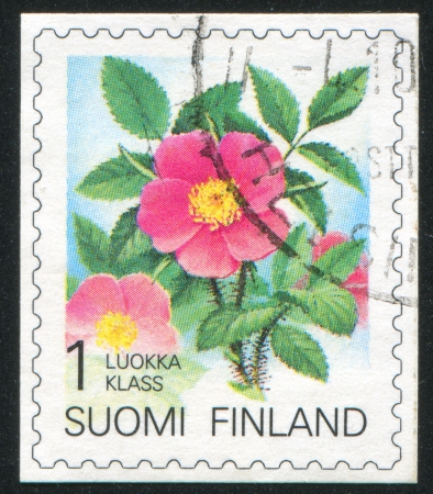 FINLAND - CIRCA 1990: stamp printed by Finland, shows Karelian rose, circa 1990