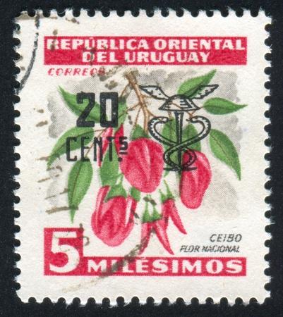 androecium: URUGUAY - CIRCA 1954: stamp printed by Uruguay, shows National Flower Ceibo, circa 1954