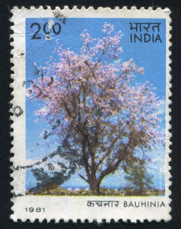 INDIA - CIRCA 1981; stamp printed by India, shows tree, Bauhinia, circa 1981