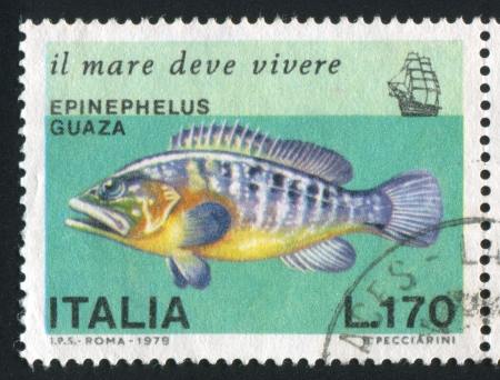 shrouds: ITALY - CIRCA 1978: stamp printed by Italy, shows Giant Grouper, circa 1978