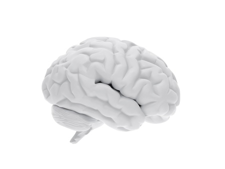 High resolution image. 3d rendered illustration. 3d human brain. illustration