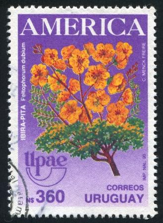 dubium: URUGUAY - CIRCA 1990: stamp printed by Uruguay, shows Peltophorum Dubium, circa 1990