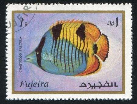 fujeira: FUJEIRA - CIRCA 1991: stamp printed by Fujeira, shows fish, circa 1991