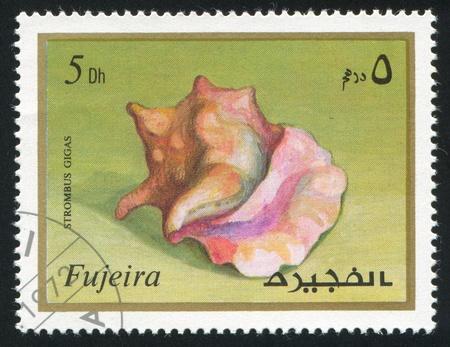fujeira: FUJEIRA - CIRCA 1991: stamp printed by Fujeira, shows shell, circa 1991 Editorial