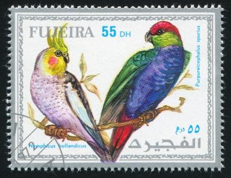 fujeira: FUJEIRA - CIRCA 1972: stamp printed by Fujeira, shows tropical bird, parrot, circa 1972
