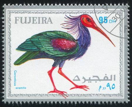 fujeira: FUJEIRA - CIRCA 1972: stamp printed by Fujeira, shows tropical bird, circa 1972