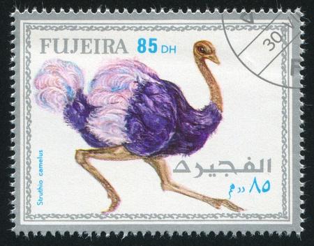fujeira: FUJEIRA - CIRCA 1972: stamp printed by Fujeira, shows ostrich, circa 1972