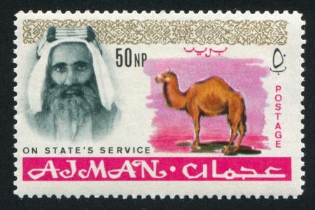 sheik: AJMAN - CIRCA 1964: stamp printed by Ajman, shows Sheik Rashid bin Humaid al Naimi and camel, circa 1964