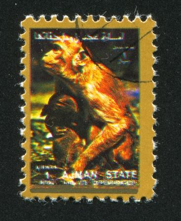 ajman: AJMAN - CIRCA 1972: stamp printed by Ajman, shows monkey, circa 1972 Editorial
