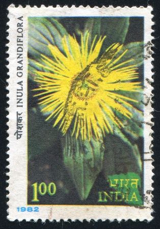 showy: INDIA - CIRCA 1982: stamp printed by India, shows flower Showy inula, circa 1982
