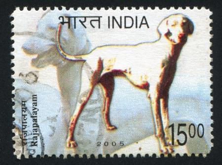 INDIA - CIRCA 2005: stamp printed by India, shows dog Rajapalayam, circa 2005 Stock Photo - 15438412
