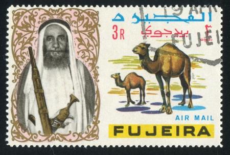 fujeira: FUJEIRA - CIRCA 1972: stamp printed by Fujeira, shows sheikh and camel, circa 1972