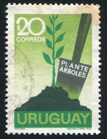 broad leaf: URUGUAY - CIRCA 1972: stamp printed by Uruguay, shows Tree Planting, circa 1972 Editorial