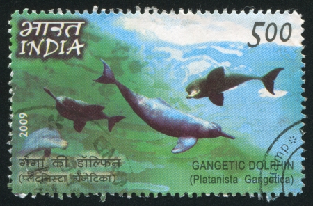 riverine: INDIA - CIRCA 2009: stamp printed by India, shows dolphin, circa 2009