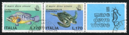 ITALY - CIRCA 1978: stamp printed by Italy, shows Giant grouper, leatherback turtle and sea horse, circa 1978 Stock Photo - 15849867