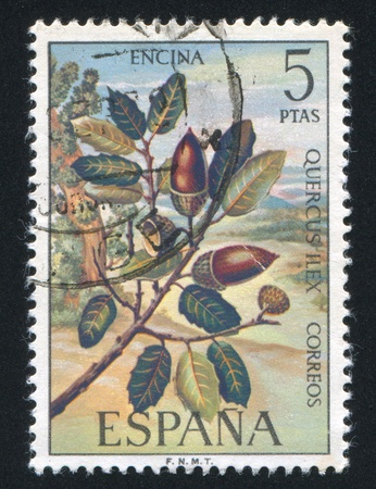 SPAIN - CIRCA 1976: stamp printed by Spain, shows Evergreen oak, circa 1976