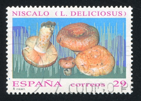 salience: SPAIN - CIRCA 1994: stamp printed by Spain, shows Mushrooms, circa 1994 Editorial