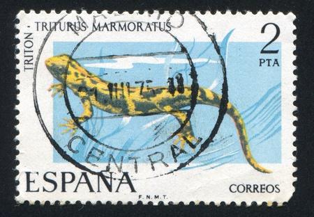 marmorate: Spagna - CIRCA 1975: timbro stampato dalla Spagna, mostra Newt, circa 1975