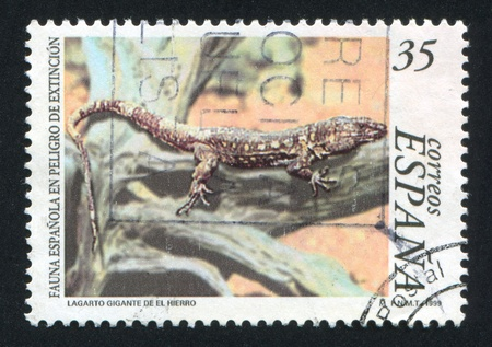 SPAIN - CIRCA 1999: stamp printed by Spain, shows Lizard, circa 1999 Stock Photo - 16223786
