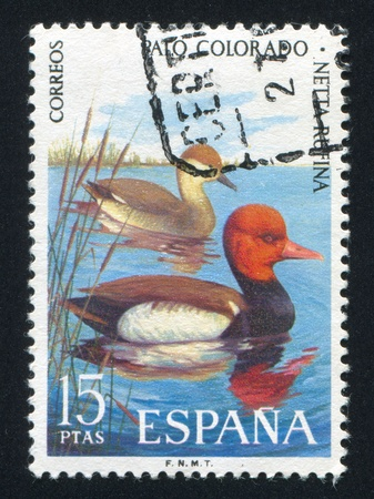 SPAIN - CIRCA 1995: stamp printed by Spain, shows Mandarin Duck, circa 1995 Stock Photo - 16223925