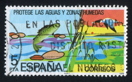 SPAIN - CIRCA 1978  : stamp printed by Spain, shows Pond, Cane, circa 1978 Stock Photo - 16223872