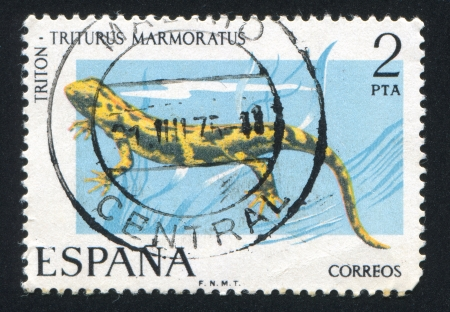 SPAIN - CIRCA 1975: stamp printed by Spain, shows Newt, circa 1975 Stock Photo - 16285140
