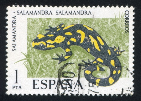 SPAIN - CIRCA 1975: stamp printed by Spain, shows Salamander, circa 1975 Stock Photo - 16285144