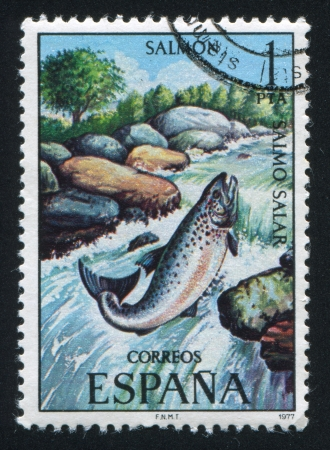 SPAIN - CIRCA 1977: stamp printed by Spain, shows Salmon, circa 1977 Stock Photo - 16285295