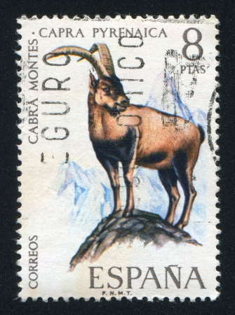 pyrenean: SPAIN - CIRCA  1976: stamp printed by Spain, shows Pyrenean goat, circa 1976 Editorial