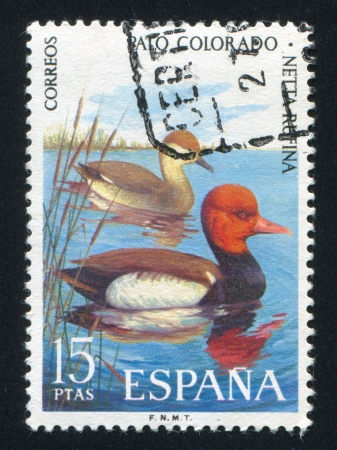SPAIN - CIRCA 1995: stamp printed by Spain, shows Mandarin Duck, circa 1995 Stock Photo - 16285428