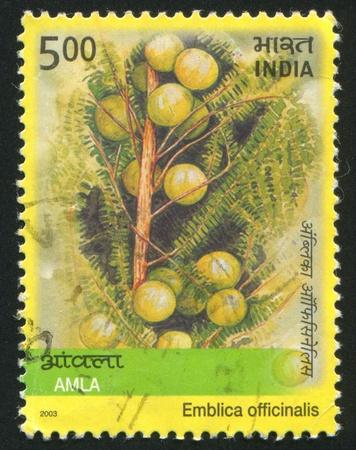 INDIA - CIRCA 2003: stamp printed by India, shows plant Emblica officinalis, circa 2003 Stock Photo - 16337763