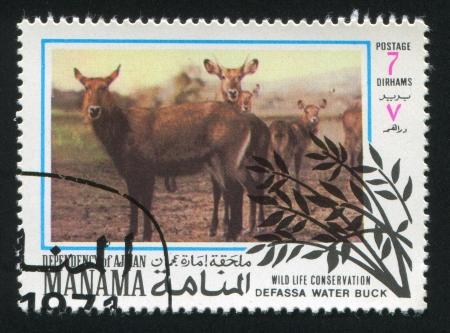 bovid: MANAMA - CIRCA 1971: stamp printed by Manama, shows Defassa Waterbuck, circa 1971 Editorial