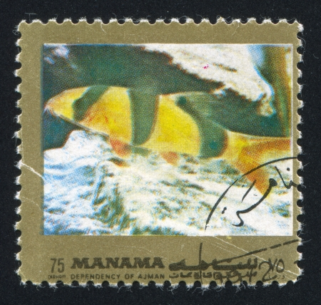 MANAMA - CIRCA 1971: stamp printed by Manama, shows a Fish, circa 1971 Stock Photo - 16745583