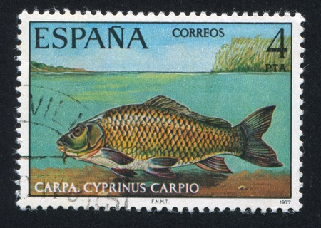 limnetic: SPAIN - CIRCA 1977: stamp printed by Spain, shows Carp, circa 1977