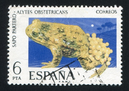 SPAIN - CIRCA 1975: stamp printed by Spain, shows Midwife Toad, circa 1975 Stock Photo - 16745474