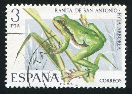 limnetic: SPAIN - CIRCA 1975: stamp printed by Spain, shows Tree Toad, circa 1975