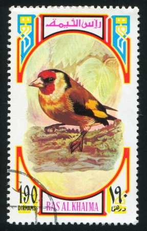 RAS AL KHAIMA - CIRCA 1972: stamp printed by Ras al Khaima, shows European Goldfinch, circa 1972 Stock Photo - 17145714