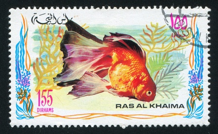 RAS AL KHAIMA - CIRCA 1972: stamp printed by Ras al Khaima, shows Gold fish, circa 1972 Stock Photo - 17145528