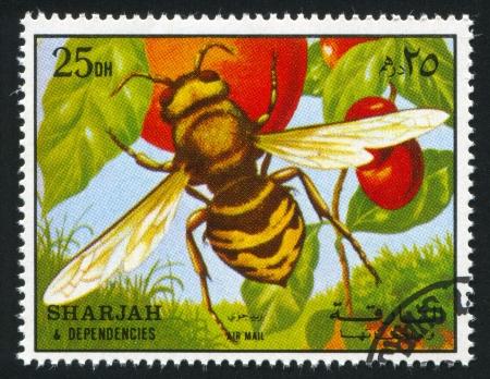 apocrita: SHARJAH AND DEPENDENCIES - CIRCA 1972: stamp printed by Sharjah and Dependencies, shows a Wasp, circa 1972 Editorial