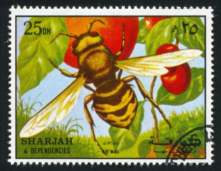 SHARJAH AND DEPENDENCIES - CIRCA 1972: stamp printed by Sharjah and Dependencies, shows a Wasp, circa 1972 Stock Photo - 17145688